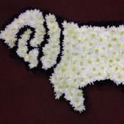 Derby County Ram